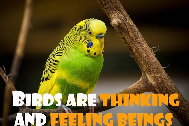 Birds are thinking and feeling beings