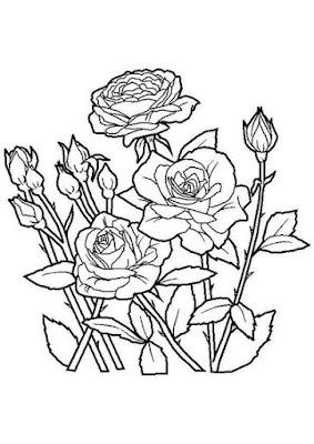 Sketsa gambar bunga mawar