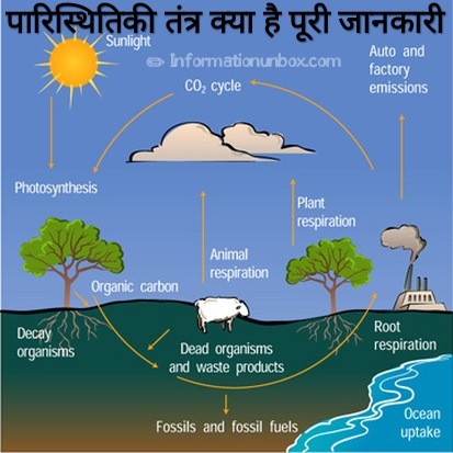 ecosystem-in-hindi