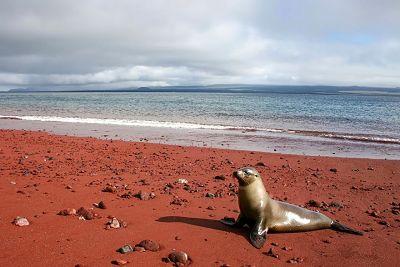 Playa roja. Islas Galápagos