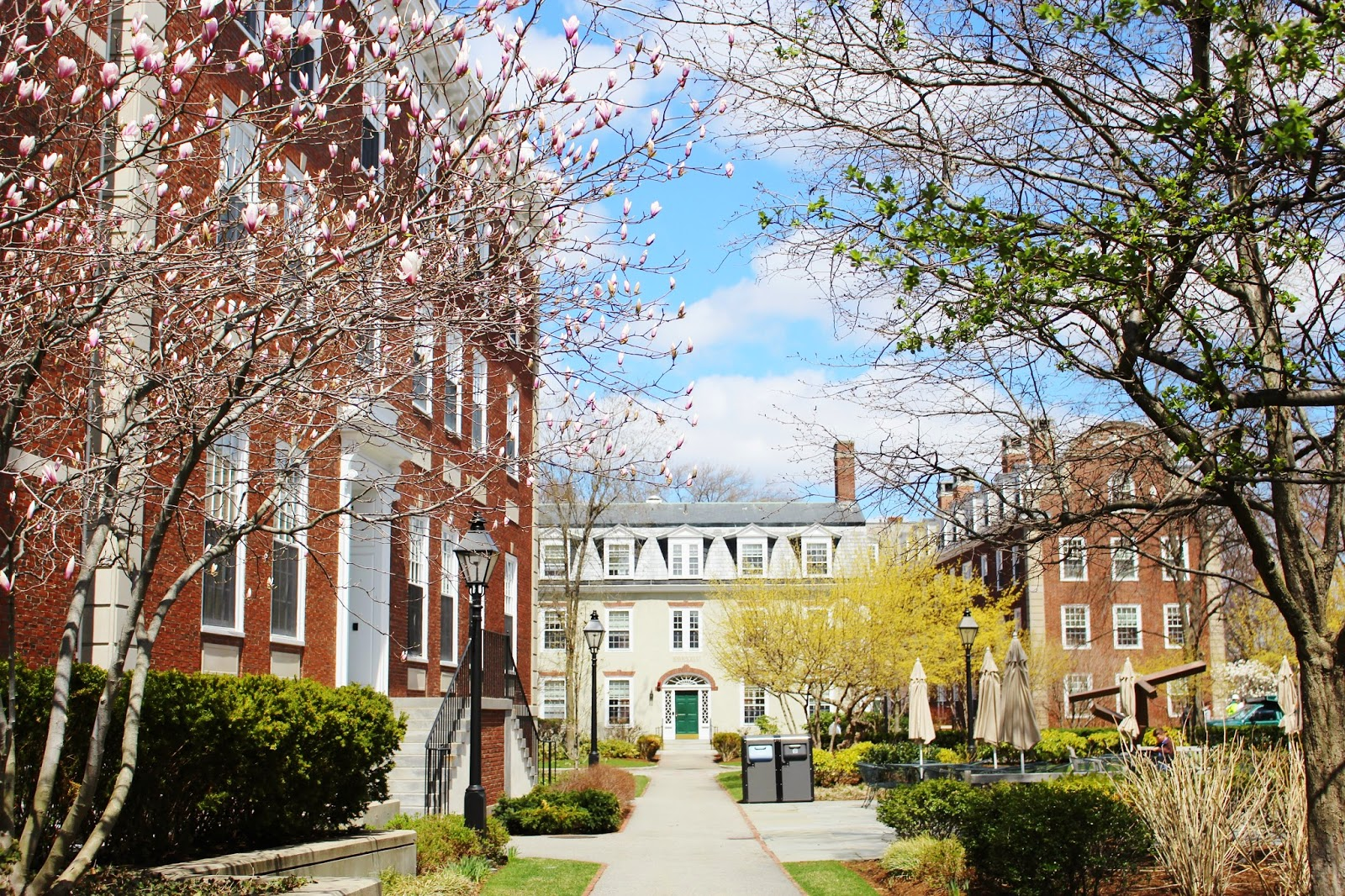 bijuleni - harvard campus buildings
