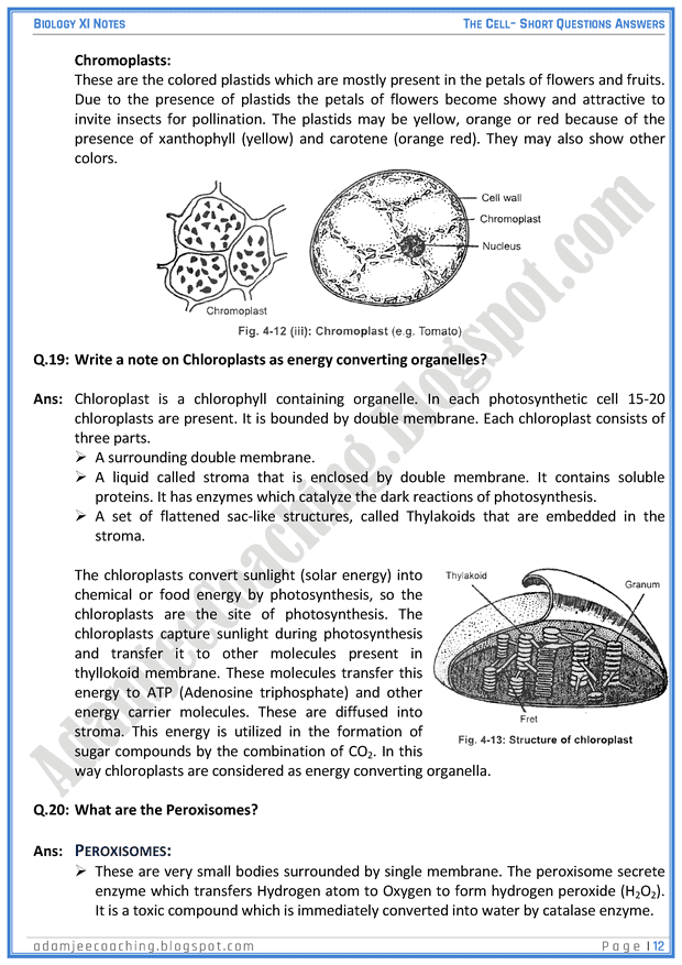 the-cell-short-question-answers-biology-11th