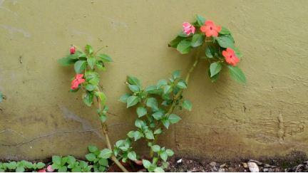 Bunga Liar yang Indah