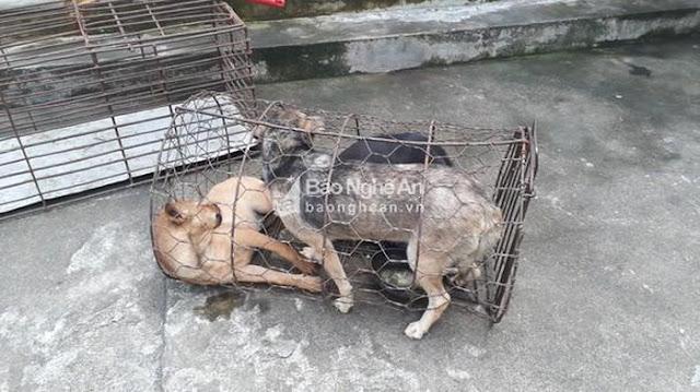 Tóm gọn ổ nhóm mang theo vũ khí nóng thực hiện 70 vụ câu trộm chó ở Nghệ An