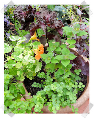 Herbs for Summer Salads