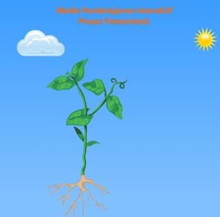 Belajar dan Mengamati Proses Fotosintesis Pada Tumbuhan (IPA)