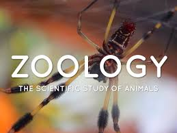 12th Zoology Second Revision Exam Question Paper 2020