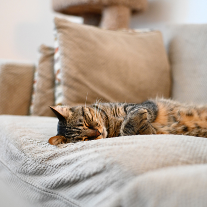 tabby cat asleep on a sofa