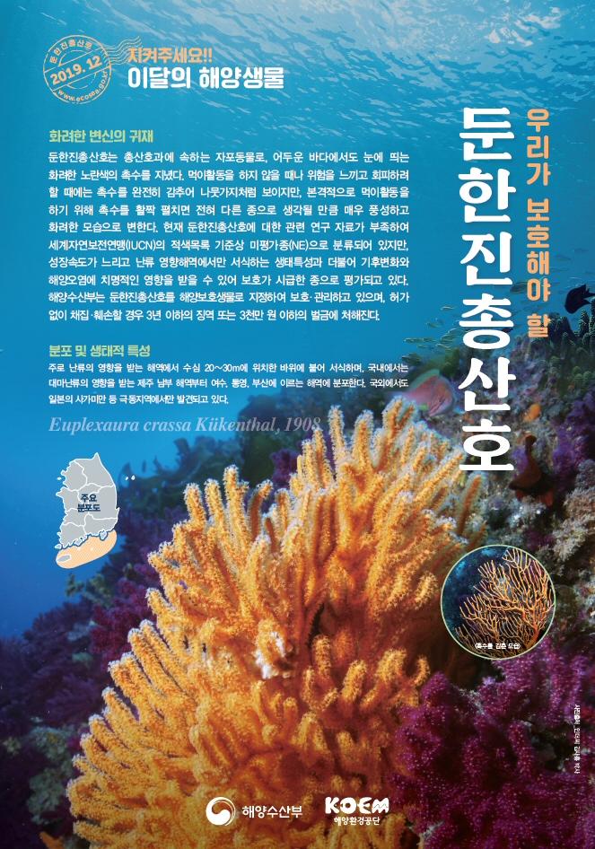 해양수산부, 2019년 12월의 해양생물로 '둔한진총산호' 선정