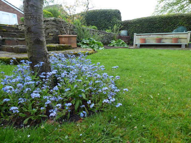 Forget Me Nots April Garden