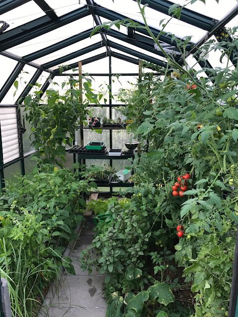 Tomaten und Paprika im Gewächshaus (c) by Joachim Wenk