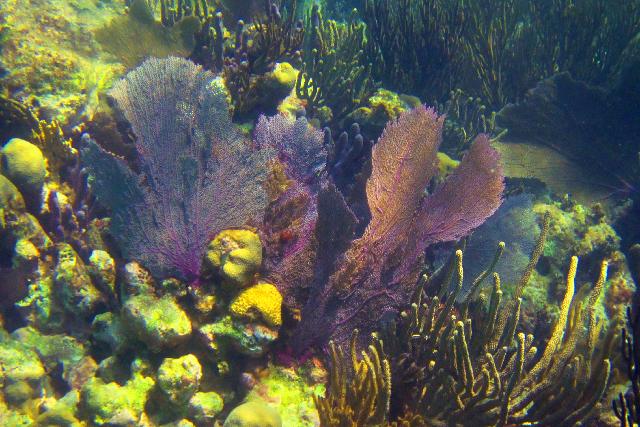 Los mares, clave y solución para la vida en el planeta