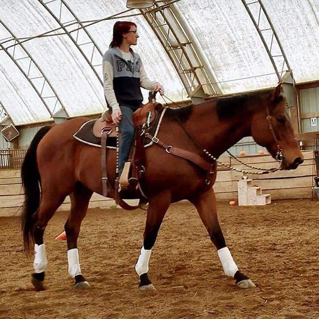Download 50 Gambar Kuda Paling Jantan & Betina