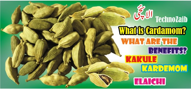 What is Cardamom? Benefits of Elaichi?