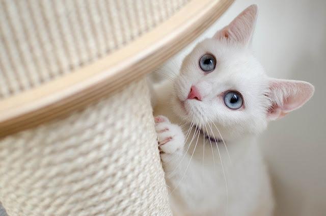 gambar kucing keren dan lucu