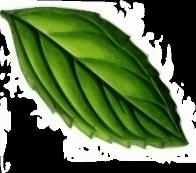 supaya rambut cepat panjang juga bisa menggunakan teh hijau
