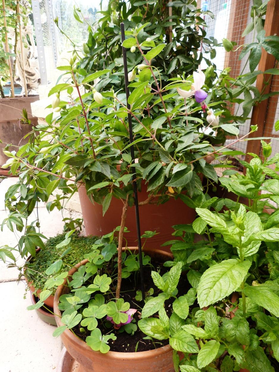 Plantes pour jardinières peu gourmandes en arrosage Gerbeaud