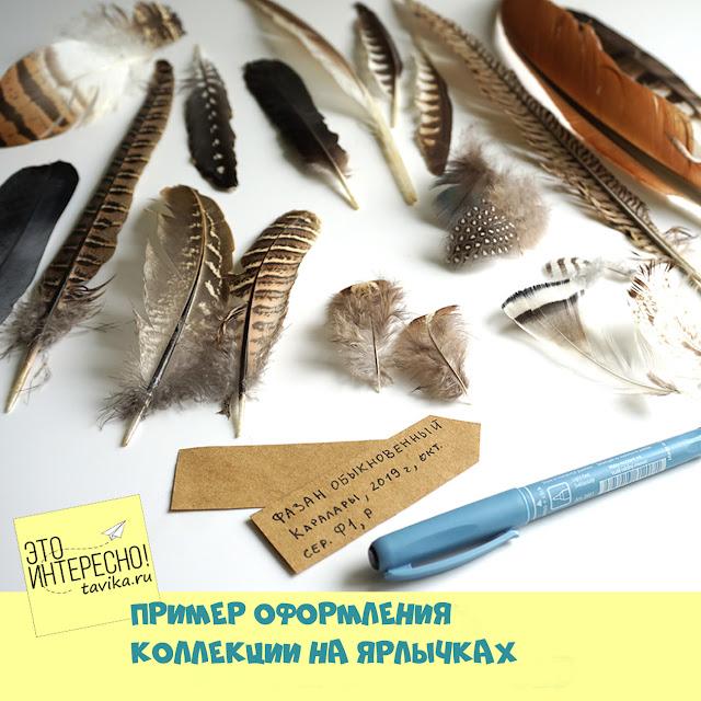 Как сделать ярлыки для коллекции перьев птиц