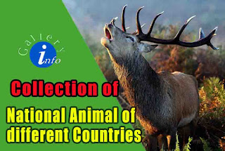 National of Animals of Different Nations