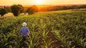 لماذا تختفي التربة من الاراضي الزراعية - موقع عناكب الاخباري