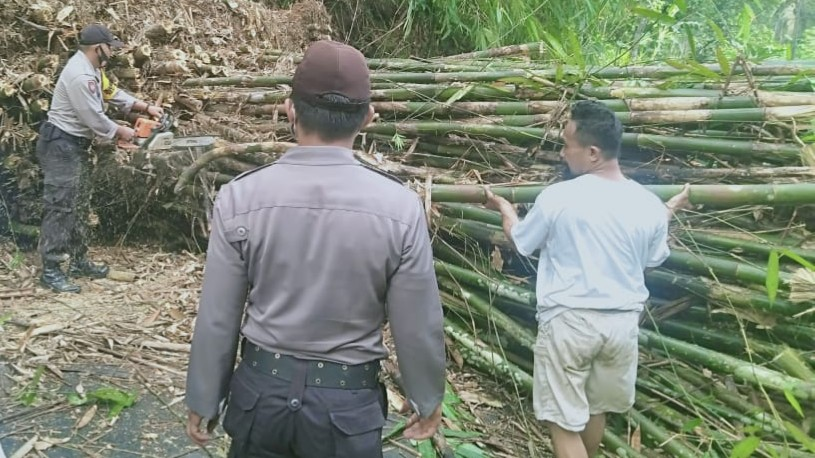 Ini Penyebab Pohon Bambu Roboh Menutup Jalan di Karangmoncol