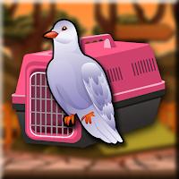 G2J Ringneck Dove Escape