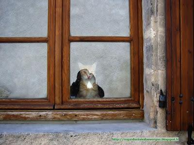 Le chat Roux de Charroux 03