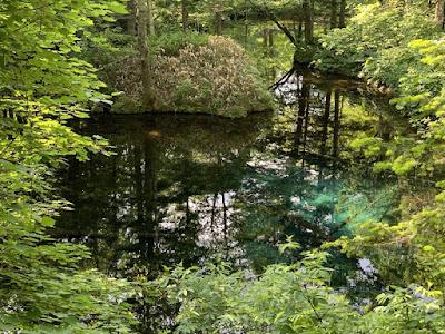 神の子池その2