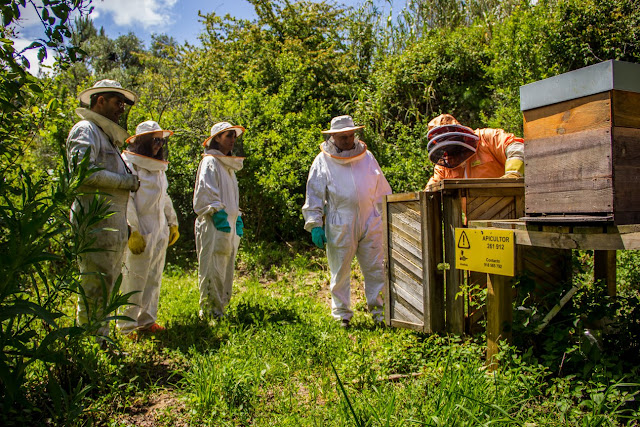 Festa dos Maios-Visita ao apiário
