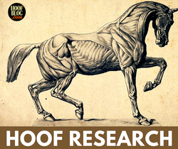 Hoof Blog farrier research