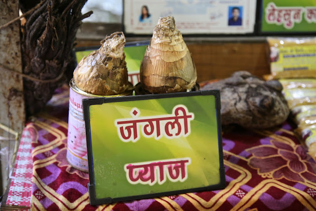 Jungle Onions, Pachmarhi, India, pic; Kerstin Rodgers/msmarmitelover.com