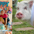 Pig celebrates birthday with peppa pig inspired party