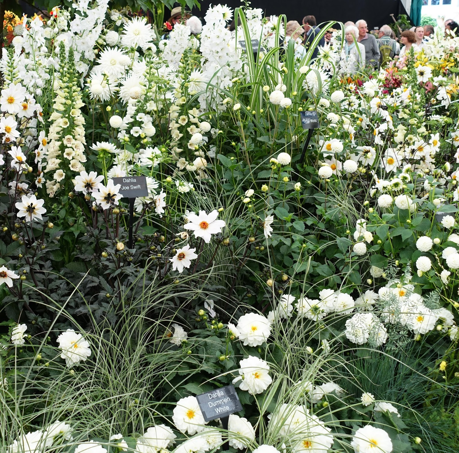 An all-white stand in the pavilion, Chelsea Flower Show 2017