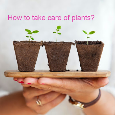 plant-caring-tips