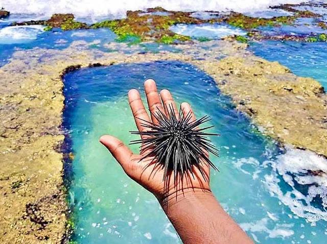 පොල්ලෙලි පල් කරපු - තල්පේ තටාක 🌴🥥🌊🏊🏻♂️ (The rock pools in Thalpe) - Your Choice Way