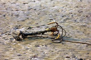 Hati-Hati Liburan ke Pantai Karena 7 Benda Ini