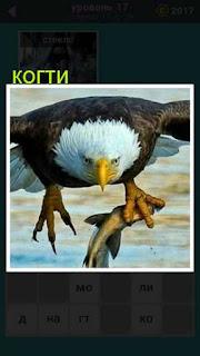 птица в полете которая в когтях держит пойманную рыбу 667 слов 17 уровень