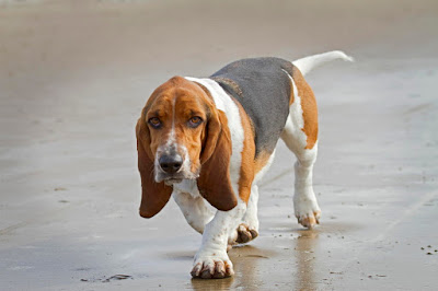 Latest Dog HD image  for 2020