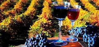 Şarap Üretim Teknolojisi nedir