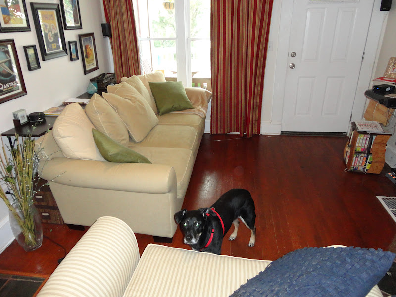 No Coffee Table Living Room Oversized Furniture Sets Fingers Crossed Small Solution Shelf Behind The Couch Look At All New Floor Space We Have Now Mabel Had To Check Out What Was Going On She Loves Camera