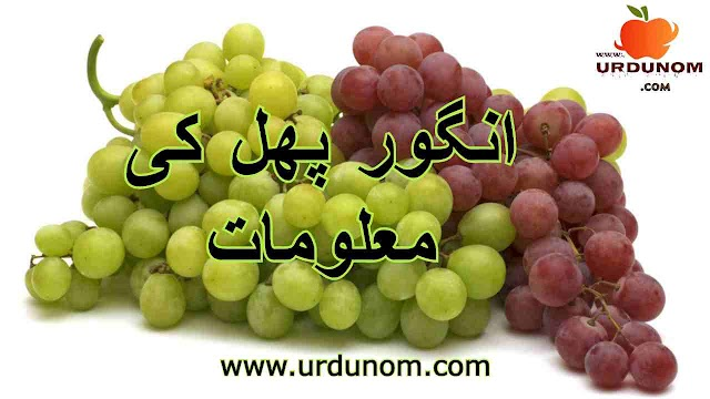 انگور پھل کی معلومات | Grape Fruit Information