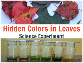 Leaf Pigment Science Experiment