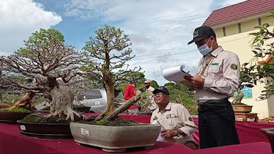 Bonsai Bernilai Ratusan Juta Terpajang di KRL Lampung Barat