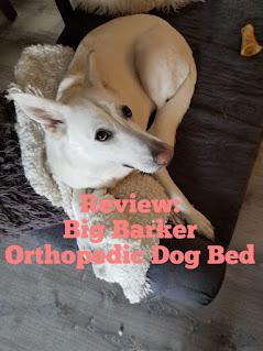 White German Shepherd dog sitting on Big Barker Orthopedic Dog Bed