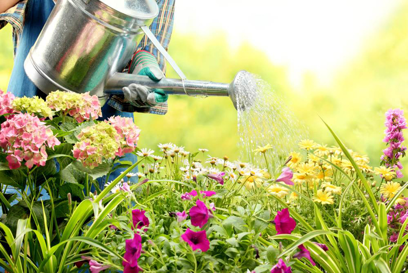 The Best Time to Water Your Plants in The Summer