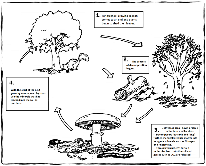 Effects of Climate Change on Leaf Litter Decomposition