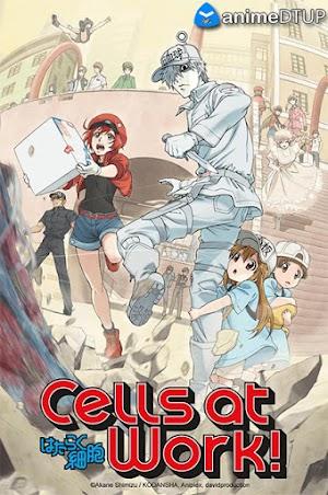 Cells at Work! (13/13) + Ova [Cast/Jap+Subs] [BDrip 1080p]