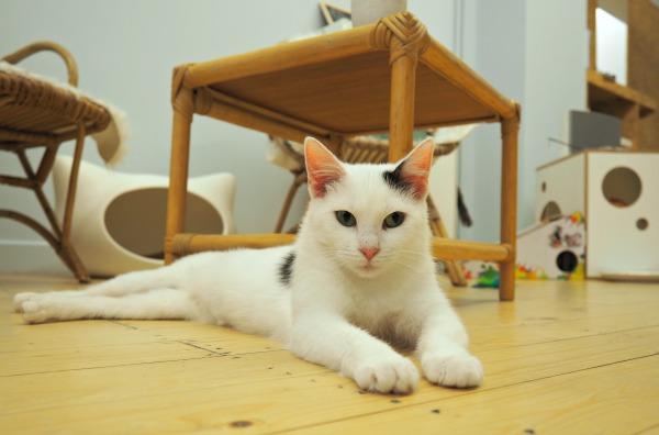 cat café dreamcatchers