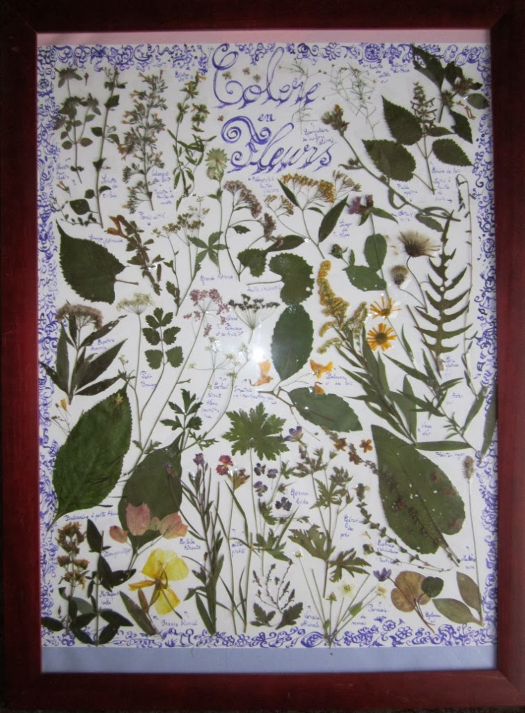 artiste en herbes: tablo herbier (fleurs de montagne, villlage d
