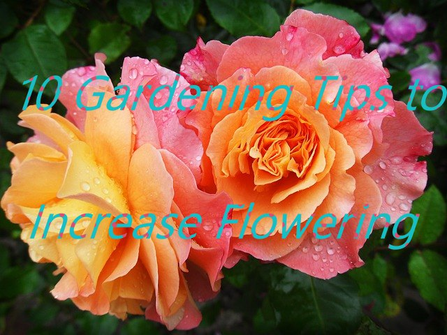 top 10 Gardening Tips to Increase Flowering : GARDEN